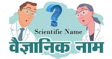 scientific-name